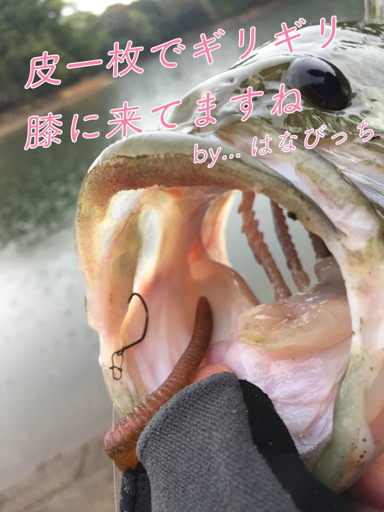 【バス釣り】春のバス釣り!ルアー選択迷いまくり回