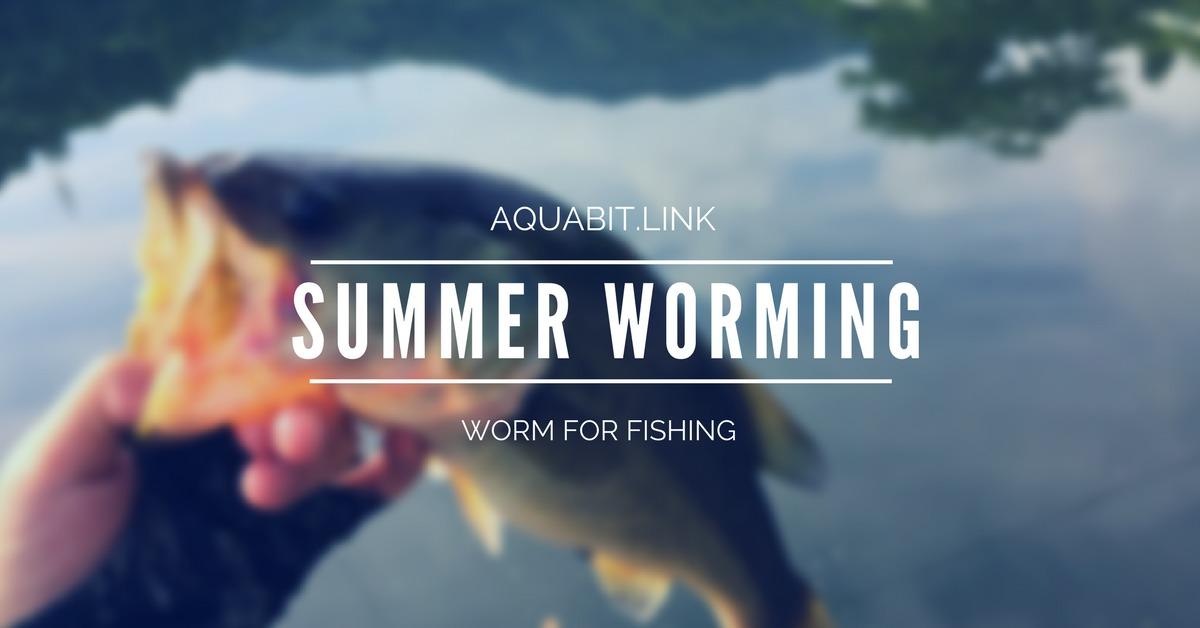 【バス釣り】夏場にワームを使ってバスを手軽に釣るたった1つの方法