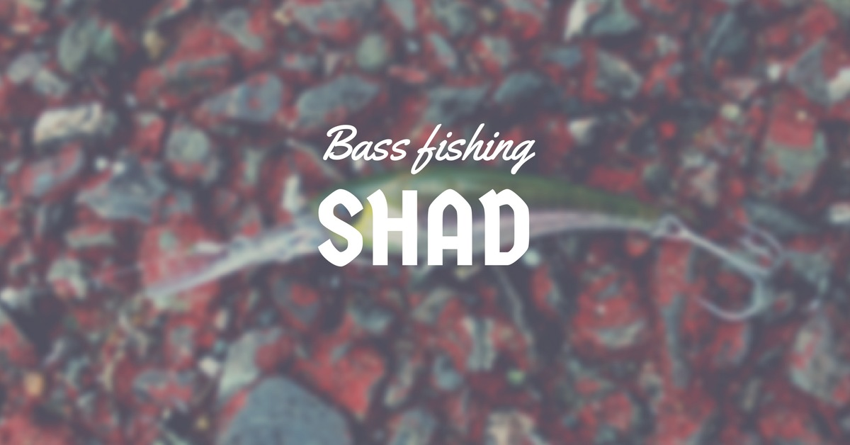 【バス釣り】シャッドで釣るために大切な2つ使い方!