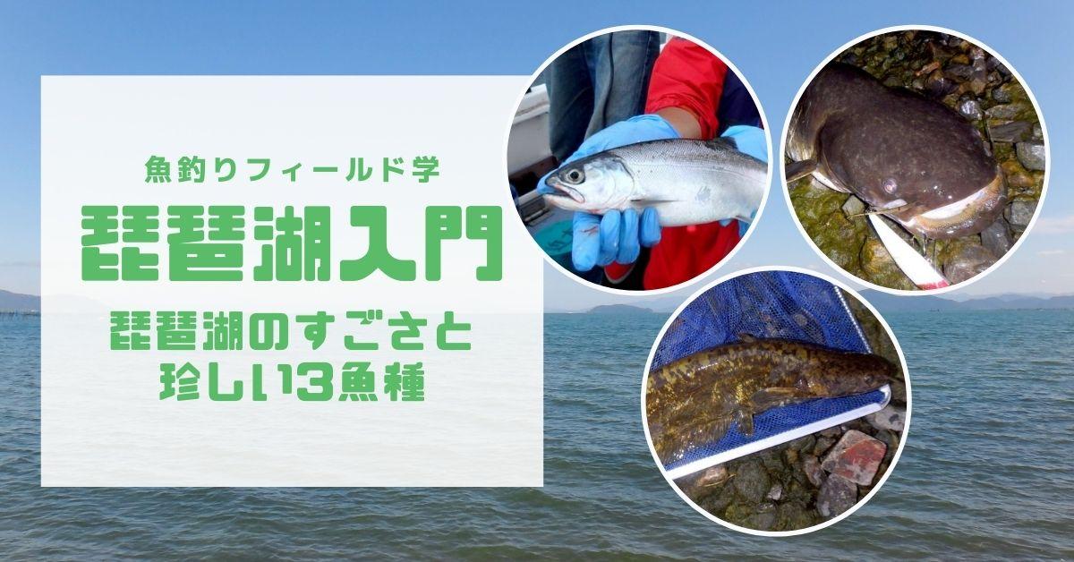琵琶湖のすごさと珍しい魚の紹介記事_サムネイル