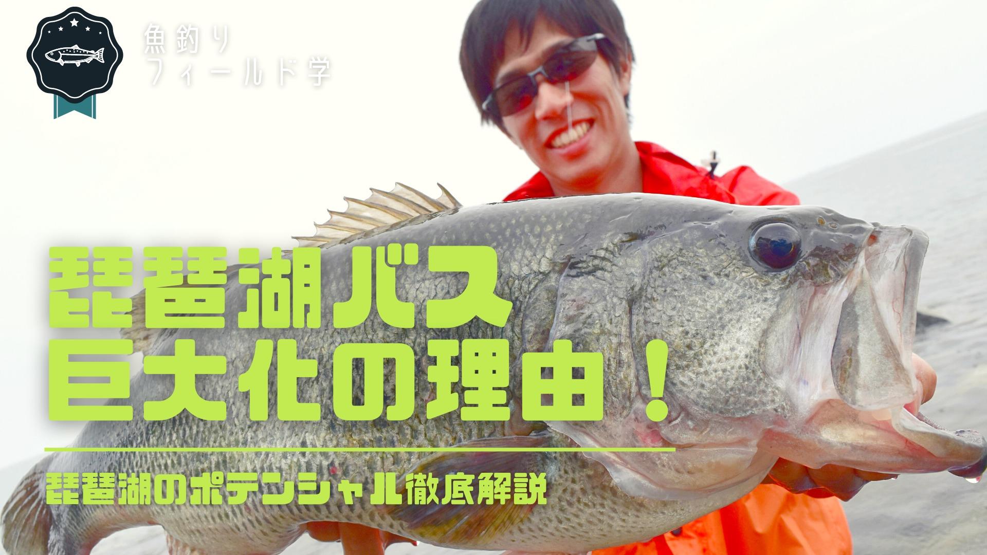 琵琶湖のブラックバス巨大化の理由_サムネイル