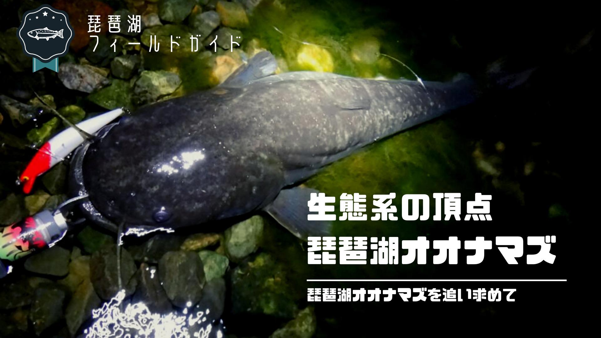 琵琶湖オオナマズは釣れる!日本三大怪魚の琵琶湖オオナマズの釣り方とタックルとは.jpg