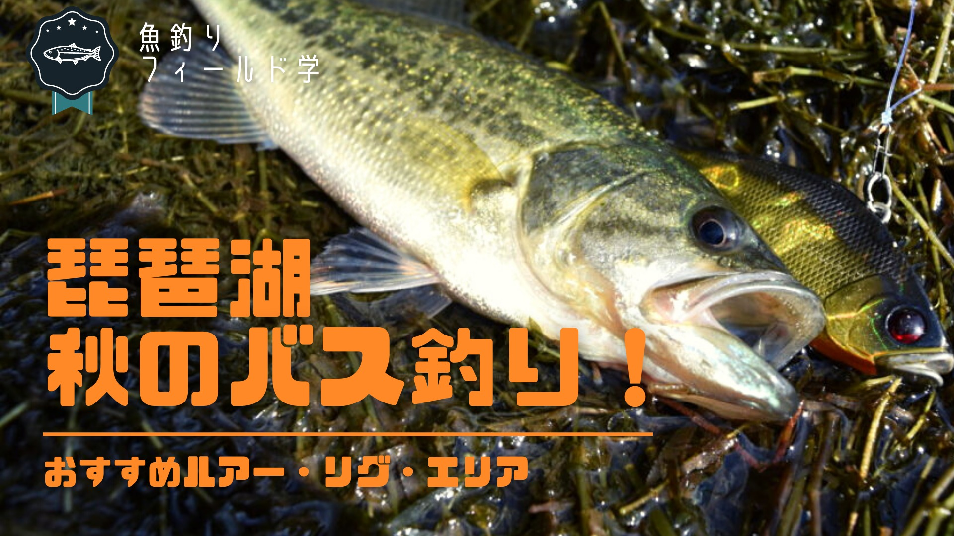 秋のバス釣り琵琶湖おすすめルアー・リグ・エリア_サムネイル