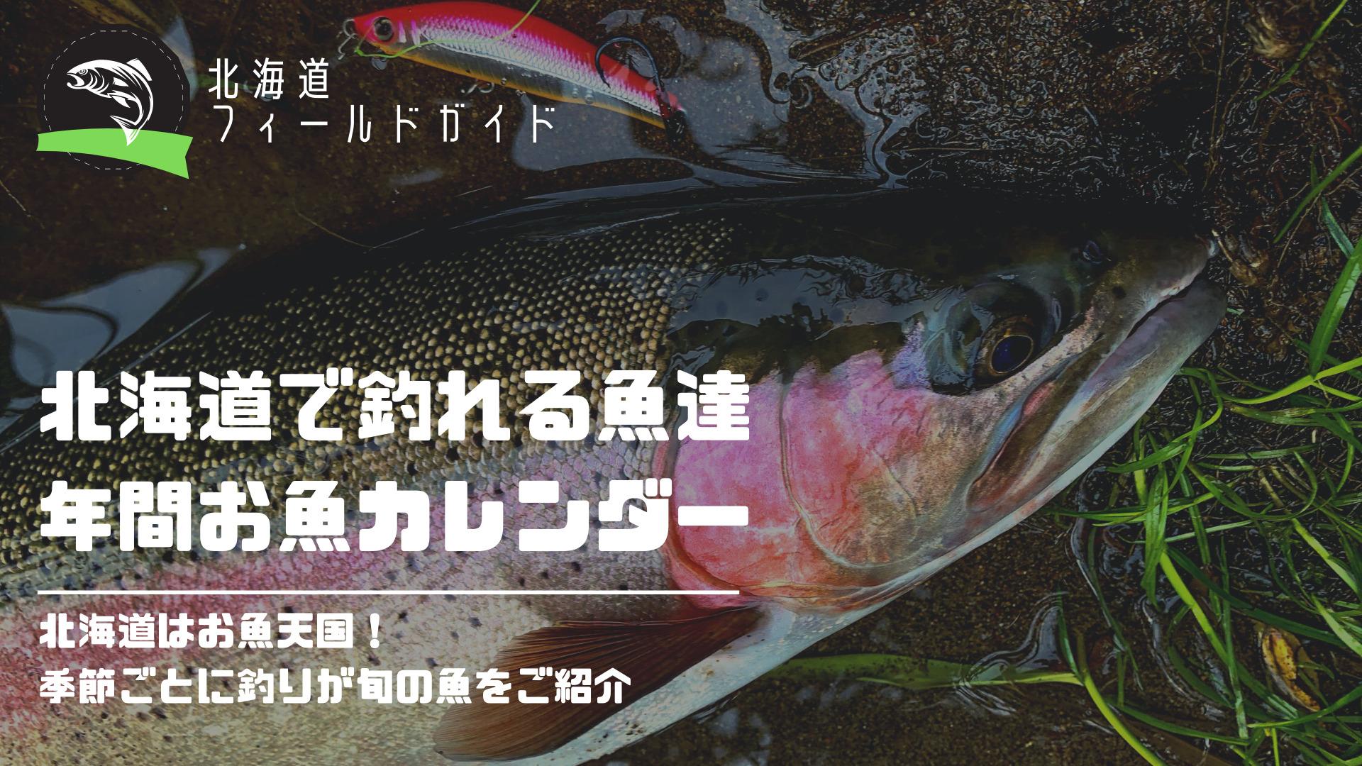 北海道のお魚カレンダー!お魚天国の北海道で季節に釣りの旬をご紹介_サムネイル