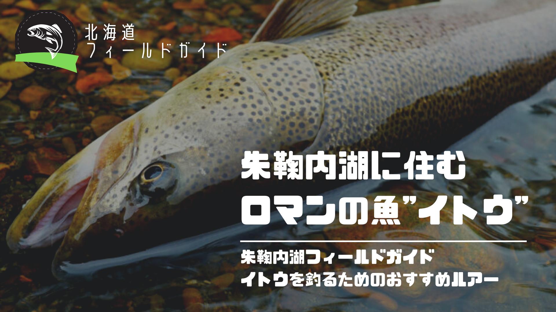 幻の魚「イトウ」が釣れる北海道の朱鞠内湖!地元民がおすすめルアー3選と釣れるトラウトの種類を解説