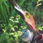 巻物で爆釣れする秋に突入!ソウルシャッドを使った秋の数釣りパターンをご紹介!